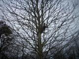 20110313_Draisinenrennen_PICT0093